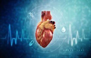 Valvele cardiace protetice, testate cu o inimă bionică