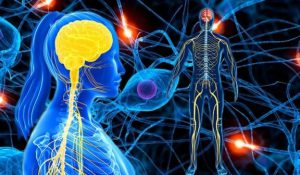 Știi și câștigi sănătate: Sistemul nervos, computerul organismului uman