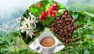 Știi și câștigi sănătate: Cafeaua, energizant și protector împotriva multor boli