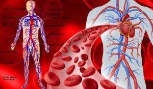Știi și câștigi sănătate: Sângele și viața